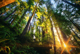 First Forest Light, Sun and Trees, Prairie Coast Redwoods, California Coast Photographic Print by Vincent James