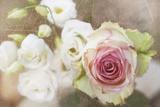 My Friend the Rose Stampa fotografica di Viviane Fedieu Daniel
