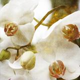 Dust Orchid Stampa fotografica di Viviane Fedieu Daniel