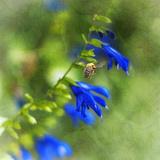 Love of Spring Stampa fotografica di Viviane Fedieu Daniel