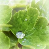 Drop of Rain Stampa fotografica di Viviane Fedieu Daniel