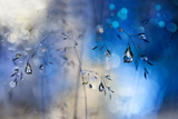 Blue Rain Photographic Print by Heidi Westum