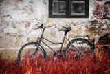 The Forgotten Bike Photographic Print by Philippe Sainte-Laudy