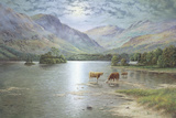 Highland Cattle Giclee Print by Spencer Coleman