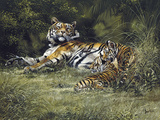 Tigress and Cubs Giclee Print by Spencer Hodge