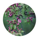 Enchanting Garden - Sphere Giclee Print by Irene Suchocki
