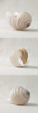 Seashell Trio I Print by Assaf Frank