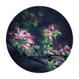 Floral Elegance - Sphere Giclee Print by Irene Suchocki