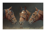 Frankel (Undefeated Brilliant Racehorse) Limited Edition by Susan Crawford
