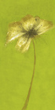 Floral Burst VIII Giclee Print by Emma Forrester