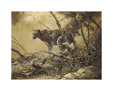 Leopard Premium Giclee Print by Spencer Hodge
