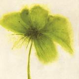 Floral Burst V Giclee Print by Emma Forrester