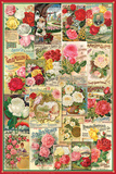 Rose Seeds Packet Collage Posters
