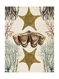 Antiquarian Menagerie - Starfish Posters by Naomi McCavitt