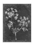 Slate Floral I Prints by Ethan Harper