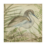 Heron and Ferns II Prints by  Vision Studio
