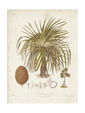 Antique Tropical Palm II Print by Elizabeth Twining
