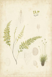 Fern Study IV Poster by  Vision Studio