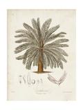 Antique Tropical Palm I Prints by Elizabeth Twining