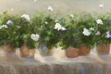 White Geraniums Prints by Sheila Finch