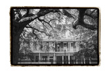 Jackson Square, New Orleans Prints by Laura Denardo