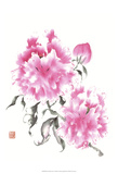 Peonie Blossoms I Prints by Nan Rae