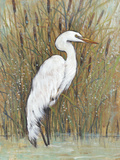 White Egret II Posters by Tim OToole