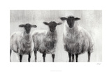 Rustic Sheep I Limited Edition by Ethan Harper