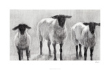 Rustic Sheep II Limited Edition by Ethan Harper