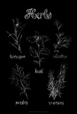 Herb Varieties Art by Ethan Harper