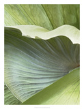 Banana Leaf I Giclee Print by Alison Jerry
