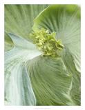 Banana Leaf II Giclee Print by Alison Jerry