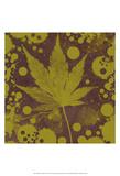 Botany Expressions II Prints by Irena Orlov