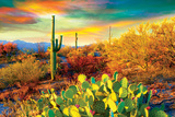Arizona Desert Colors Photo
