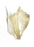 Gold Foil Shell III Kunstdrucke von  Vision Studio
