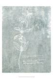 Essential Botanicals III Prints by Jarman Fagalde
