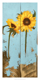 Sunflowers on Wood III Posters by Sandra Iafrate