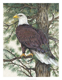 Eagle in the Pine Posters by Tim O'toole