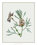 Leonurus Japonicus II Giclee Print by Melissa Wang
