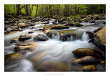 Spring on Porters Creek Giclee Print by Danny Head