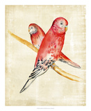 Fanciful Birds I Stampa giclée di Chariklia Zarris