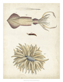 Ocean Curiosities I Giclee Print by  DeKay