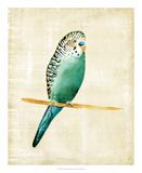 Fanciful Birds II Stampa giclée di Chariklia Zarris