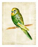 Fanciful Birds III Stampa giclée di Chariklia Zarris
