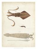 Ocean Curiosities II Giclee Print by  DeKay