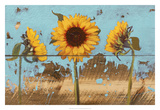 Sunflowers on Wood IV Prints by Sandra Iafrate