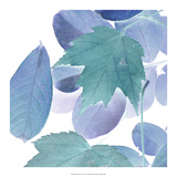 Xray Leaves III Art by  Vision Studio