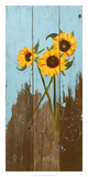 Sunflowers on Wood I Posters by Sandra Iafrate