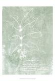 Essential Botanicals I Plakater af Jarman Fagalde