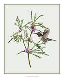 Leonurus Japonicus I Giclee Print by Melissa Wang